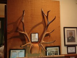 antlers from the Robt. E. Lee